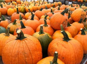 pumpkin-picking-for-kids-and-families-in-greater-boston