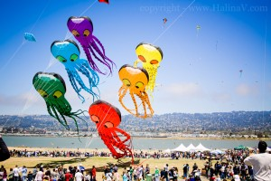 berkeley-kite-festival-san-francisco-bay-area-photography-4